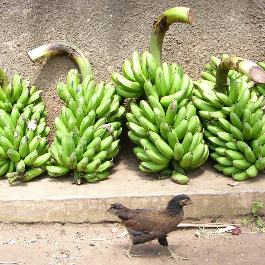 Bananen263