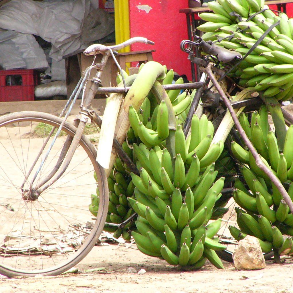 Bananen494