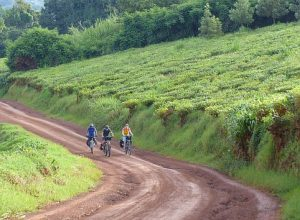 reisebericht-uganda-am-rande-des-kibale-nationalparks