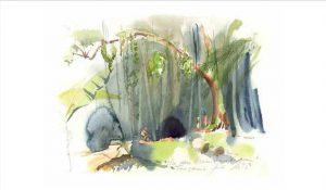 Mazumbai Forest