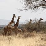 Foto Tansania